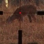 Lowlight Hunting Scope Shootout: Trijicon Accupoint TR22 2.5-10×56 vs Meopta MeoStar 3-12×56 RD