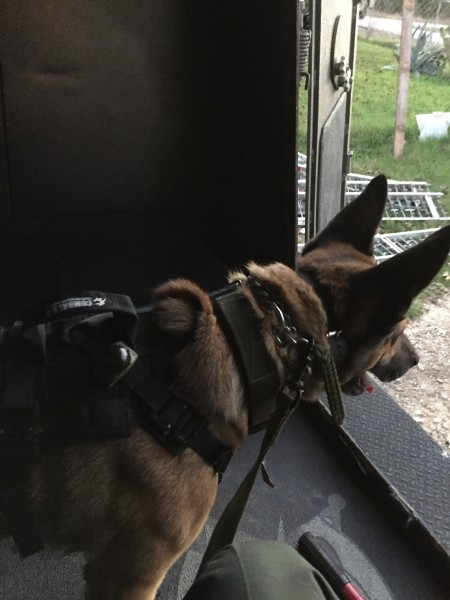 K9 Cobra Harness