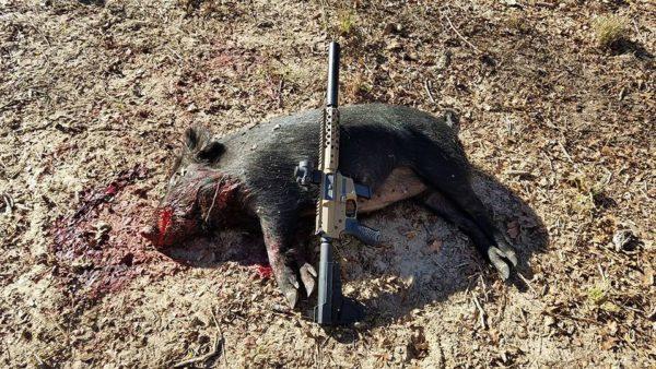 Wilson Combat AR9 hog down!